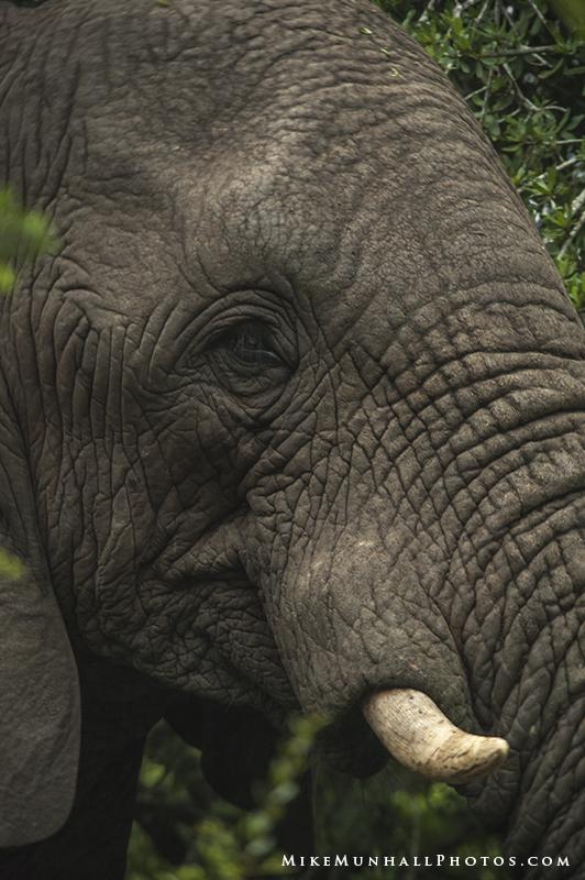 **Elephant.CNV_1982