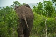 **Elephant.CNV_2005