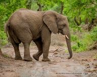 **Elephant.CNV_2008.2