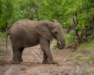 **Elephant.CNV_2040