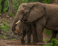 **Elephants.CNV_2068