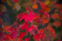 **Leaves.CNV_6826c