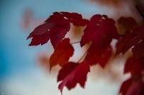 **Leaves.CNV_6830c