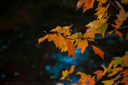 **Leaves.CNV_6833c
