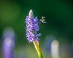 **Bee.MUN_6249